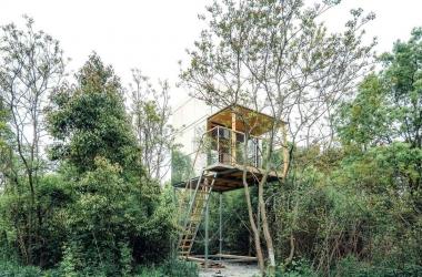 Cabin gỗ mọc giữa rừng xanh